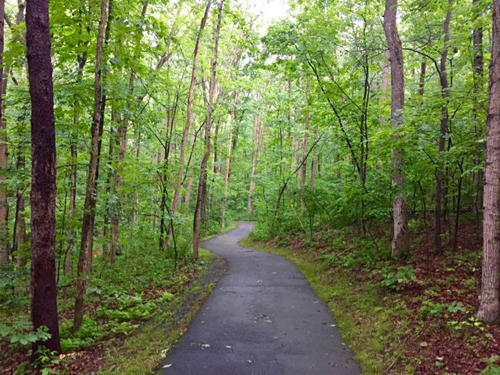 Summer-path-Reston-VA.jpg